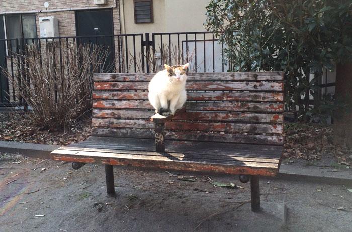 cats in Tokyo