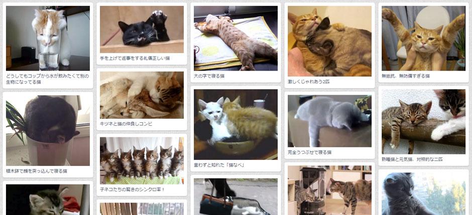 Japan cat video